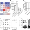 Long-term ex vivo haematopoietic-stem-cell expansion allows nonconditioned trans