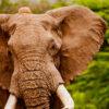 ワシントン条約(CITES)とは?その誕生と仕組みについて |WWFジャパン