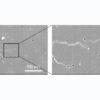 ガラスのもろさ7割低減 旭硝子・東京理科大が作製手法を開発 | 科学技術・大学 ニュ